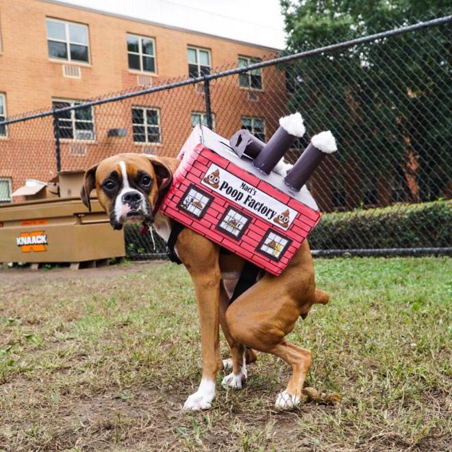 Pabrik Kotoran: Kostum Halloween DIY Terbaik Untuk Anjing Anda
