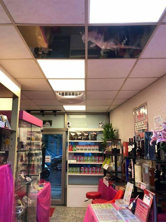 Pemilik Toko Taiwan Memasang Langit-Langit Kaca Untuk Kucingnya Dan Sekarang Mereka Tidak Akan Berhenti Menatapnya