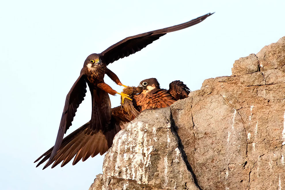 Gambar Kemenangan Spektakuler dari The Wildlife Photographer of The Year 2020