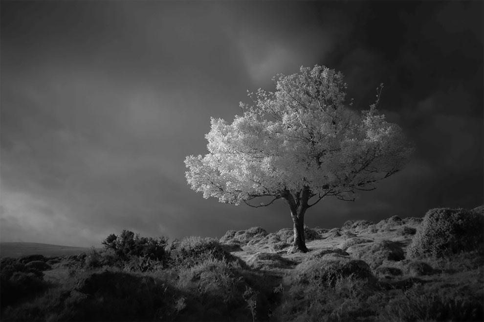 Misty Lochs, Magical Woods, dan Spektakuler Lightning Strrikes: Puaskan Mata Anda dengan Hasil Kemenangan yang Luar Biasa untuk Penghargaan Fotografer Pemandangan Tahun Ini 2020