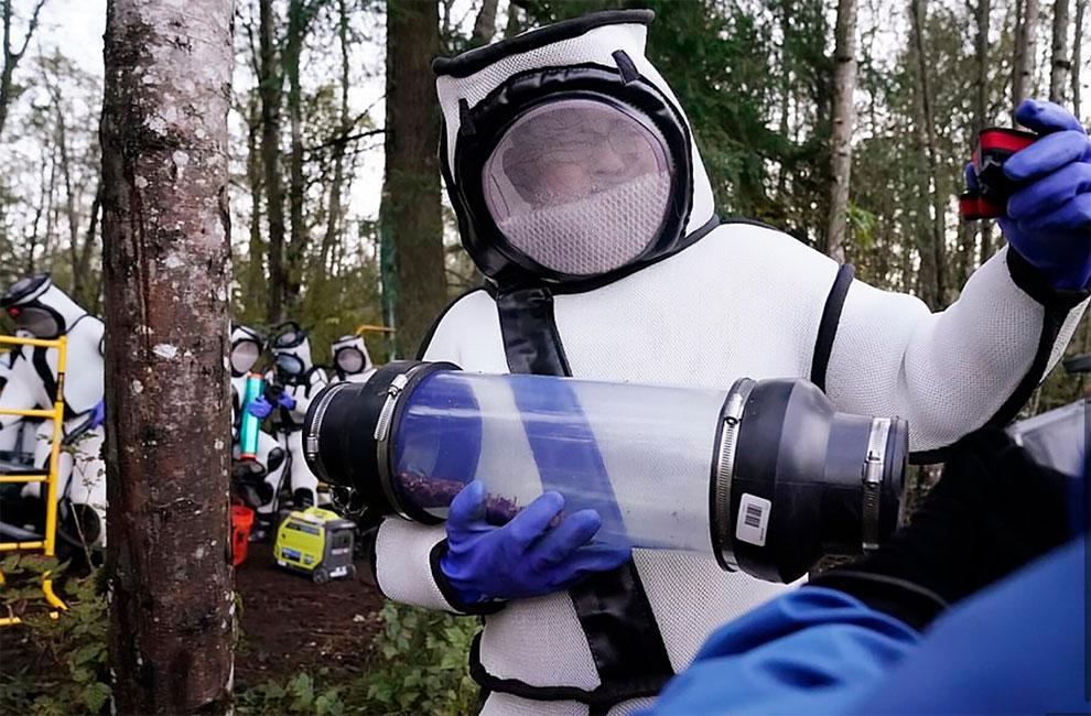 Mengenakan Pakaian Pelindung Futuristik, Awak Negara Bagian Washington Menghancurkan Sarang Tawon Pembunuhan AS Pertama