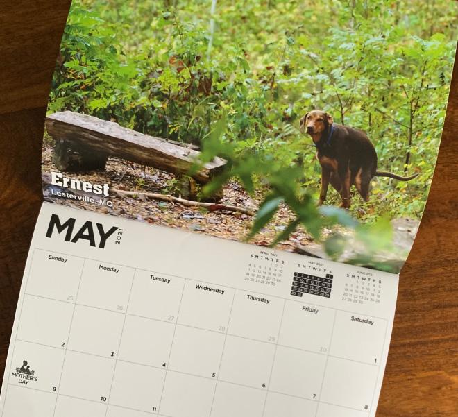 2021 Kalender Anjing Kotoran Ada Di Sini, dan Tahun Ini ...