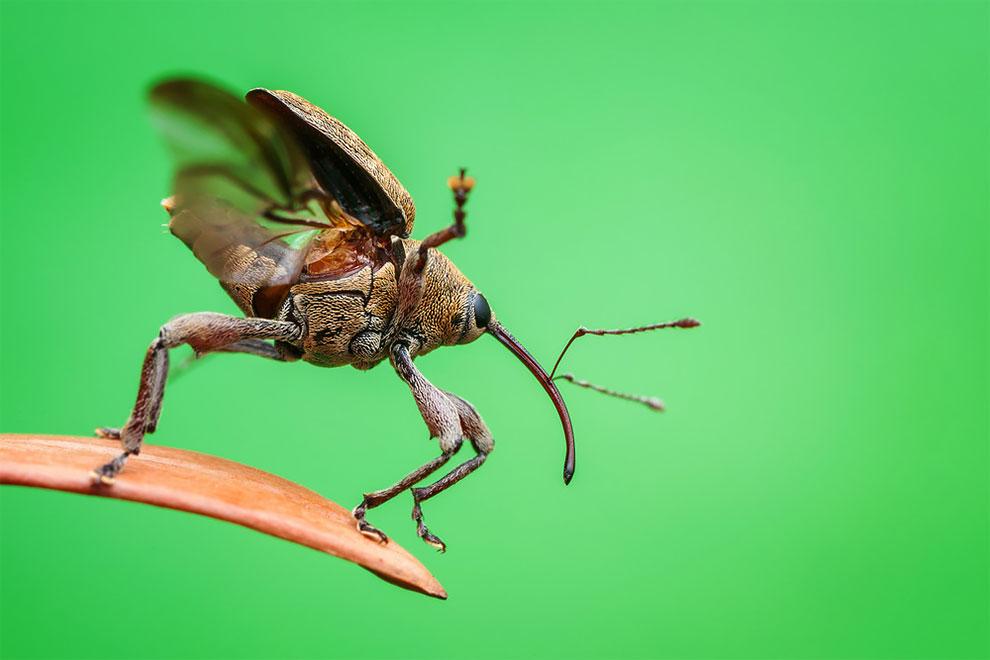 Pemenang Luminar Bug Photography Awards 2020 Baru Saja Diumumkan