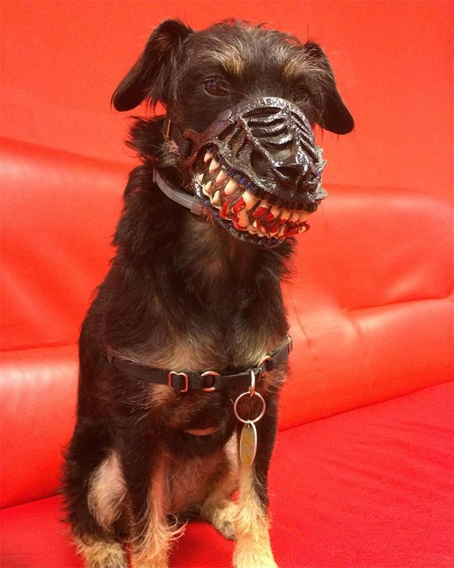 Moncong Anjing Ini Sangat Cocok Untuk Menakut-nakuti Tetangga Neraka Di Halloween