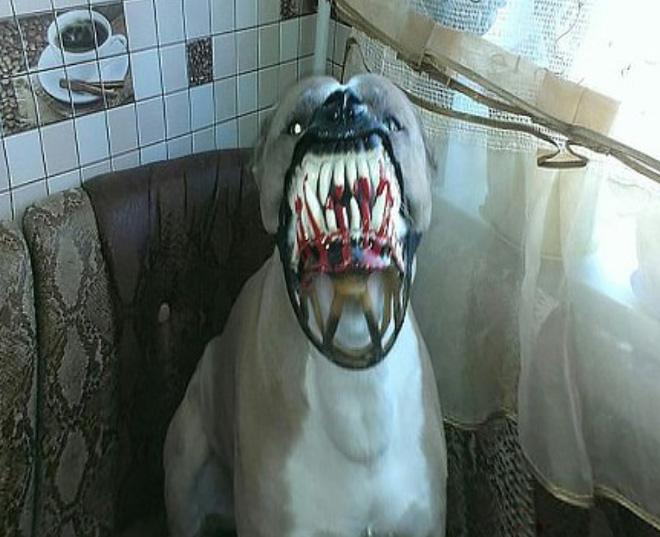 Moncong Anjing Ini Sangat Cocok Untuk Menakut-nakuti Tetangga Di Neraka Di Halloween