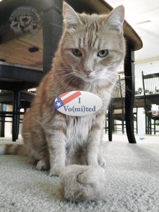 """Saya Muntah"": Kucing Bangga yang Memberikan Suara dalam Pemilu AS 2020"